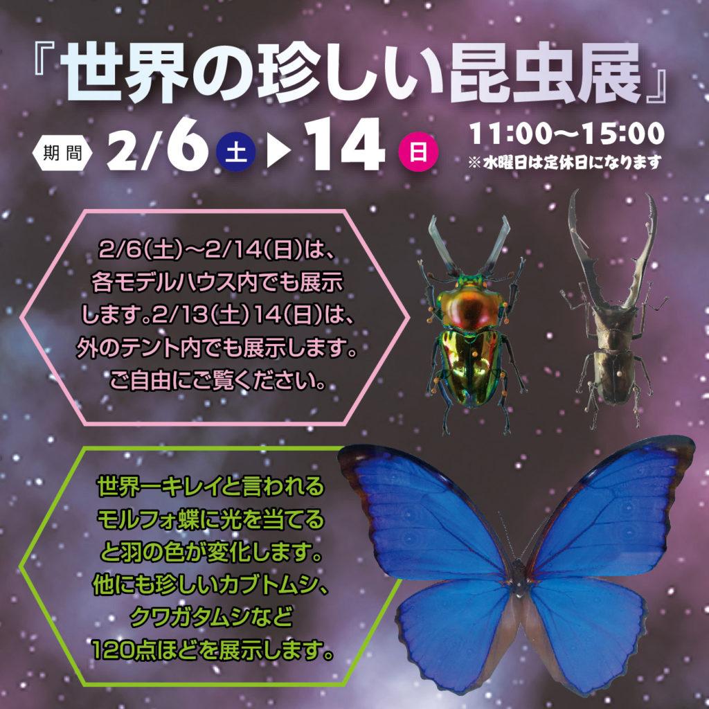 津山イーストランド住宅展示場で、2/6(土)~2/14(日)世界の珍しい昆虫展は、各モデルハウス内でも展示します。また2/13(土)14(日)は外の特設会場でも展示しますので、ご自由にご覧下さい🐜🐝 世界一キレイと言われるモルフォ蝶や珍しいカブトムシ・クガタムシなど120点ほど展示します☺